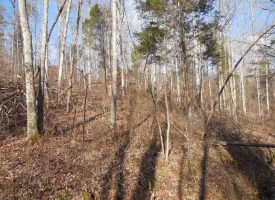 Hunting Land for Sale in Edmonson County, KY Buzzard Roost 47