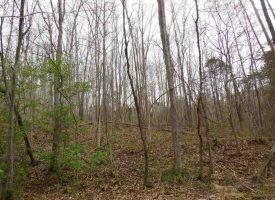 Hunting Land for Sale in Hart County, KY Fortney 141.39