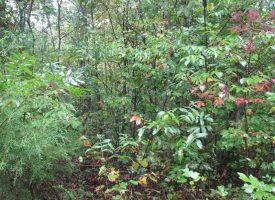 Hunting Land for Sale in Hart County, KY PT Bolich 15