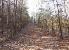Hunting Land for Sale in Hart County, KY GT Wilson Edwards 122