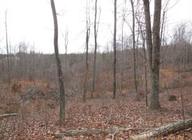 Hunting & Timberland in Hart Co. SCB75