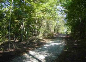 Timber Land for Sale in Metcalfe County, KY- DM Froggett 22.7