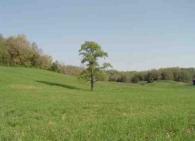 Agricultural Land for Sale in Hart County, KY- Wright 35