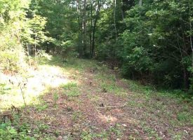 Hunting Land for Sale in Hart County, KY Schuler 34.36