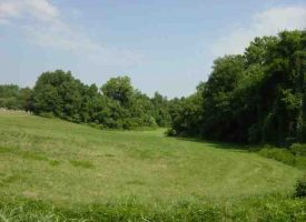 Hunting Land for Sale in Green County, KY Judd 48