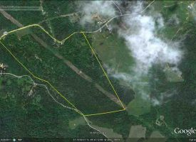 Hunting Land for Sale in Hart County, KY, Spear 103