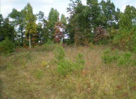 Hunting Land for Sale in Larue County, KY Sherer 25.9