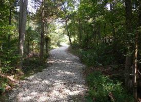 Hunting Land for Sale in Adair County, KY GT Knicely 49