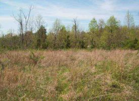Hunting Land for Sale in Hart County, KY GT Warren 93
