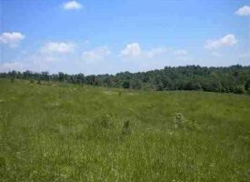Farm Land for Sale in Hart County, KY Denny 120