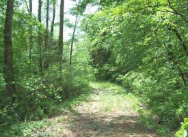 Hunting Land for Sale in Hart County, KY Gt Wilson Edwards 100