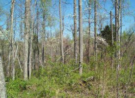 Hunting Land for Sale in Hart County, KY Gt Warren 9.4