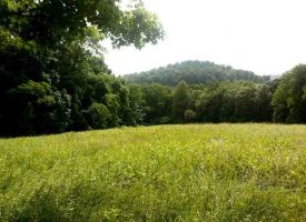 Hunting Land for Sale in Hart County, KY Fortney 233