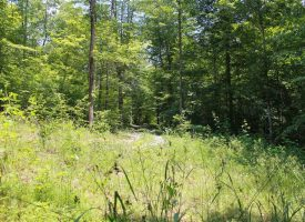 33 acres with Cabin for Sale in Kentucky