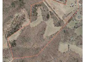 66 Beautiful wooded acres in Metcalfe County, KY