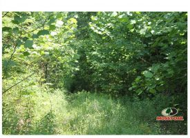 52 Acres minutes from Bowling Green