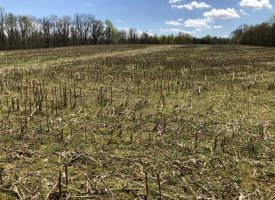 90 Acres – partially cleared – Adair County, KY