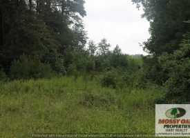21 Acres ready to be your farm – Hart County, KY