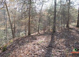 17 Acres of Hunting Recreational Land