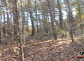 22 Acres of Hunting Recreational Land