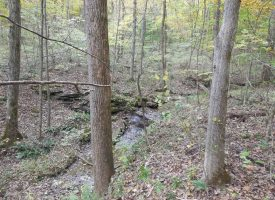 31.7 Acres Larue County, KY