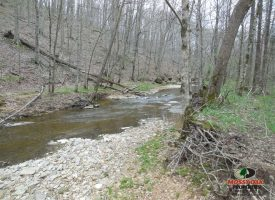 62 acres of creek timber and Crep