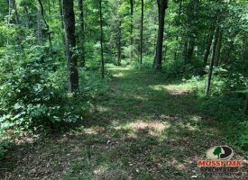 3 Acre rural Metcalfe County