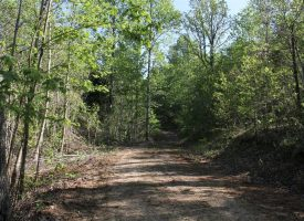 61 Acres of prime hunting land