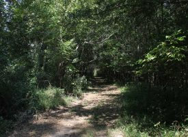 67 Riverfront Acres – Green County, KY