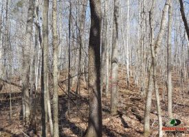 75 Acres of Hunting Property